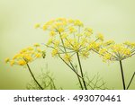 Close Up Blossoming Branch Of...