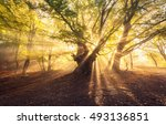magical old tree with sun rays... | Shutterstock . vector #493136851