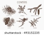 vector collection of hand drawn ... | Shutterstock .eps vector #493152235
