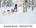 husky dogs are pulling sledge... | Shutterstock . vector #493161724