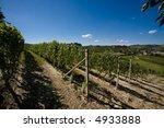 vineyard in langhe roero  italy ... | Shutterstock . vector #4933888