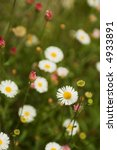 daisies and purple flowers on... | Shutterstock . vector #4933891
