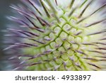 macro of a green flower with... | Shutterstock . vector #4933897