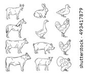 farm animals vector collection. ... | Shutterstock . vector #493417879