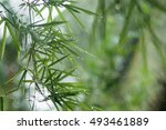 green bamboo leaves in the