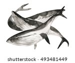 watercolor whales painting....   Shutterstock . vector #493481449