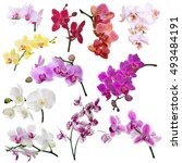 set of different orchid flowers ... | Shutterstock . vector #493484191