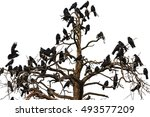 Tree Which Beset Ravens