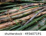 bamboo division   Shutterstock . vector #493607191