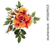 orange watercolor  roses ... | Shutterstock . vector #493609015