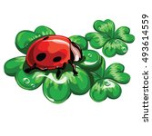 ladybird sitting on a leaf... | Shutterstock .eps vector #493614559
