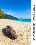 empty beach with a rock cling... | Shutterstock . vector #493681021