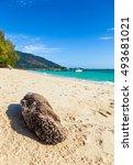 empty beach with a rock cling... | Shutterstock . vector #493681021