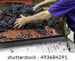 vintage vineyard | Shutterstock . vector #493684291