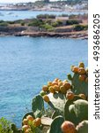 Small photo of prickly pears that have accrued over the sea