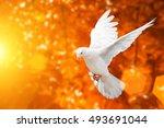 White Dove On Blur Orange And...