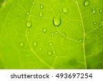 green leaf rain | Shutterstock . vector #493697254