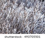 Small photo of White icy hoarfrost rime on the branches. Autumn or winter theme with ice accretion.