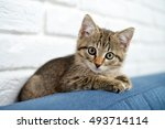 Stock photo cute little kitten lying on sofa closeup small depth of field 493714114