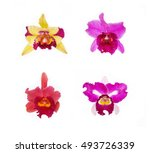 Collection Of Four Orchid...