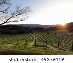 Beautiful sunset in Napa Valley in the spring - stock photo
