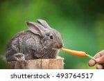 Cute Rabbit Eating Carrot From...