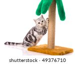 Stock photo kitten playing with toy palm isolated on white 49376710