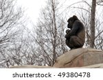 A Photograph Of A Ape Sitting...