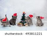 Kittens With Christmas New Yea...