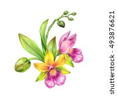 watercolor illustration  orchid ... | Shutterstock . vector #493876621