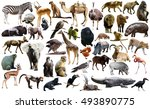 set of different african... | Shutterstock . vector #493890775