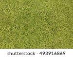 Common Duckweed  Lesser...