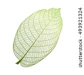 Leaf Isolated. Vector...