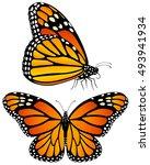vector illustration of monarch... | Shutterstock .eps vector #493941934