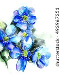 blue primrose on white... | Shutterstock . vector #493967251