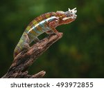 Panther Chameleon And Mantis