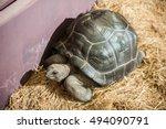 Tortoise Pet Crawling  In Farm.