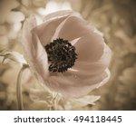 flowers backgrounds effect... | Shutterstock . vector #494118445