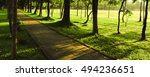 in the morning time green park... | Shutterstock . vector #494236651