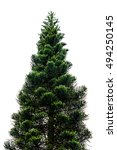 Pine Tree Isolated On White Fo...