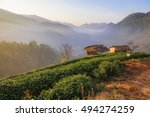 tea farm cover with fog in... | Shutterstock . vector #494274259