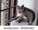 Portrait Of Little Tiger Cat...