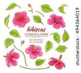 hibiscus flowers vector set on... | Shutterstock .eps vector #494364019
