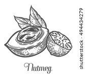 nutmeg nut seed vector.... | Shutterstock .eps vector #494434279