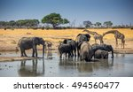 African Scene From Camp With...