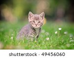 A Grey Cat Posing Outside