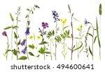 watercolor drawing wild flowers ... | Shutterstock . vector #494600641