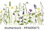 watercolor drawing wild flowers ... | Shutterstock . vector #494600671