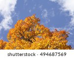 Autumn Sky  Autumn Beauty