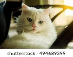 white persian cat lying on the... | Shutterstock . vector #494689399